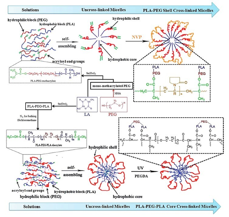 Schematic formation and structure of PLA-PEG shell cross linked micelles and PLA-PEG-PLA core cross linked micelles