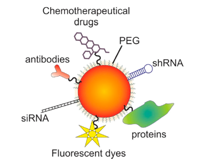 Figure 2. Gold nanoparticles' (AuNPs) functionalization for theranostics.