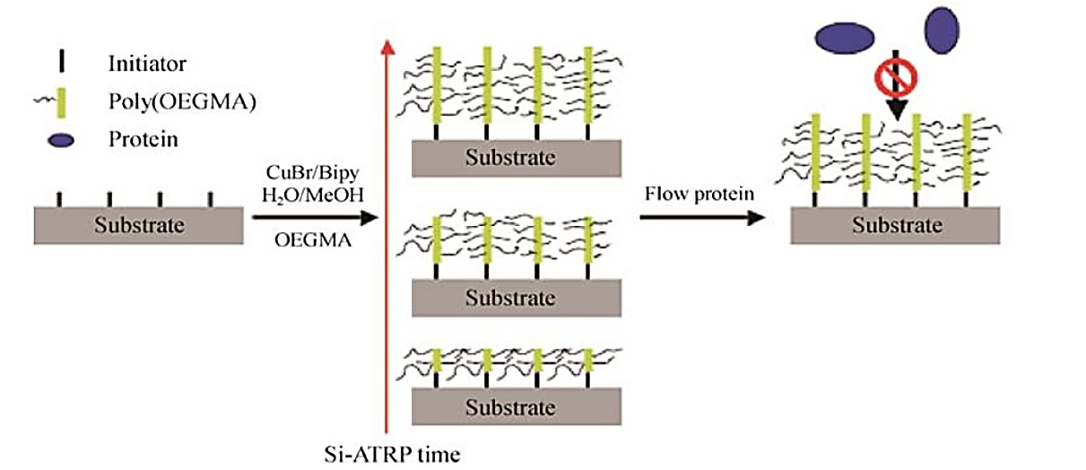 Surface polymerization procedure and further bio application based on PEG derivatives