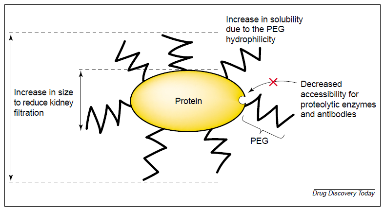 Figure 1. Main advantages of PEGylated protein.
